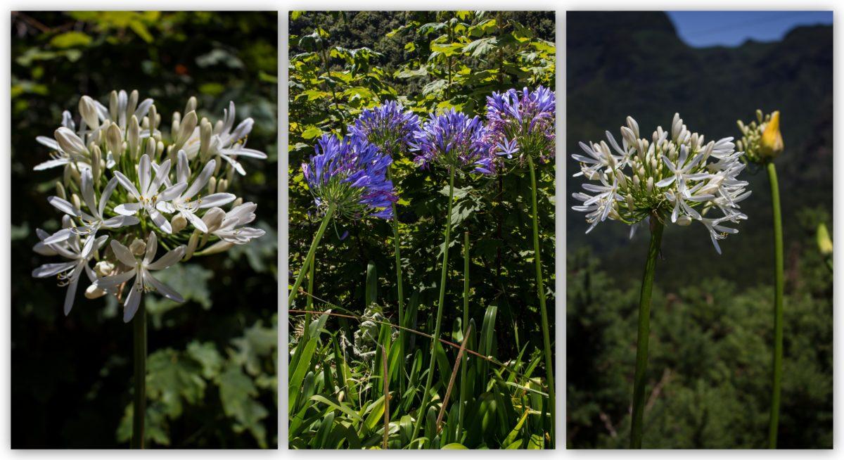 Flowers Of Madeira Odkryc Piekno Blog Podrozniczy