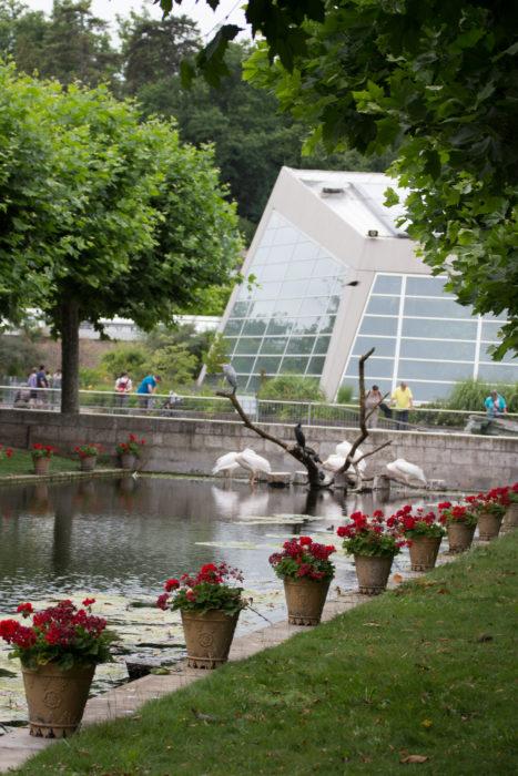 Ogród Botaniczny Wilchelma Niemcy