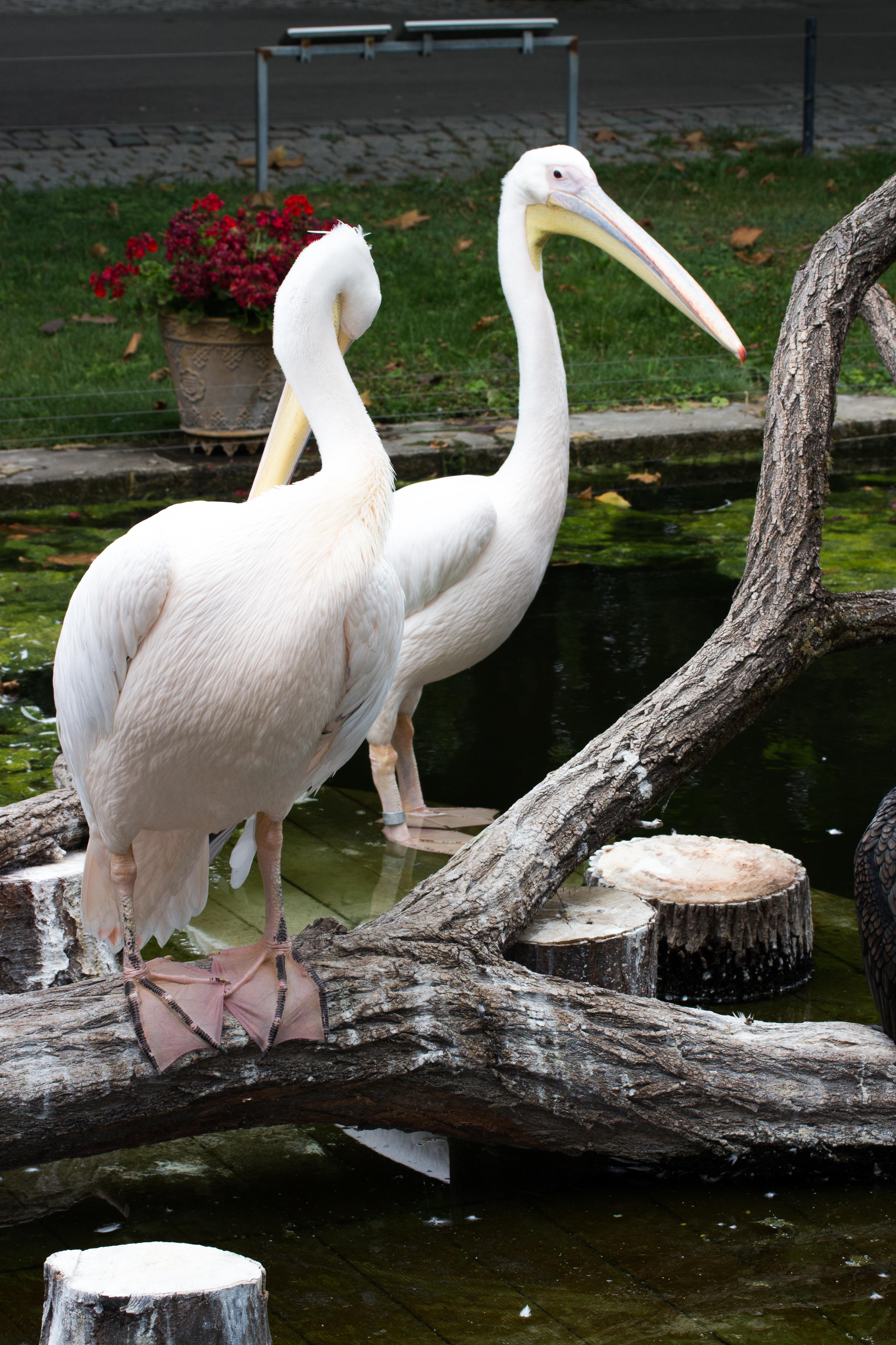 Ogród Botaniczny Wilchelma Stuttgart