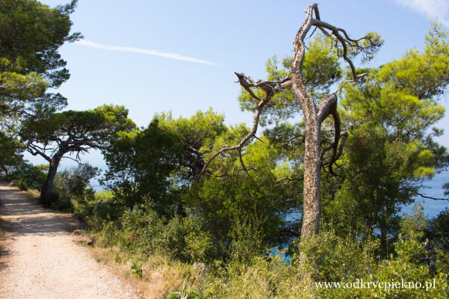 Makarska Park suma Osejava